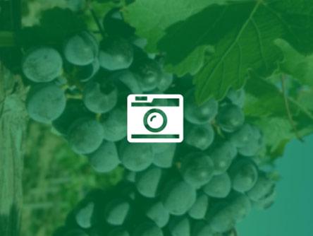 De Krans White Muscadel Reserve - ½ flaske